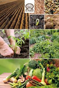 Le Stagioni: Conosciamo frutta e verdura